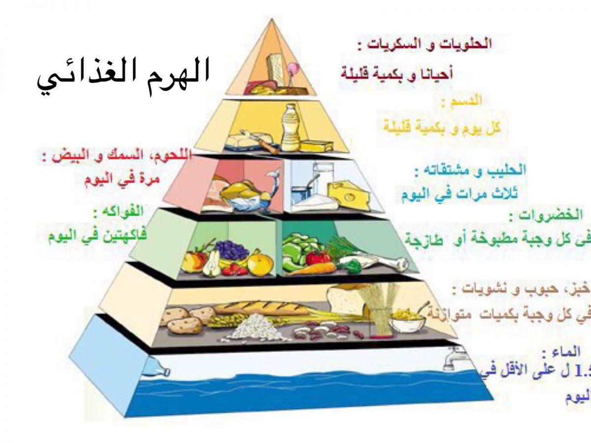 الهرم الغذائي - انفوجرافيك